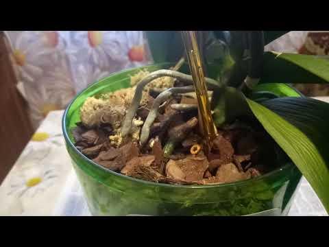 У орхидеи вянут листья, в чём причина?