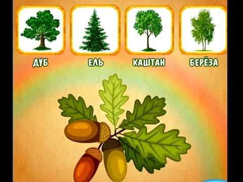 игра найди дерево по описанию характеристики хранятся ПТО