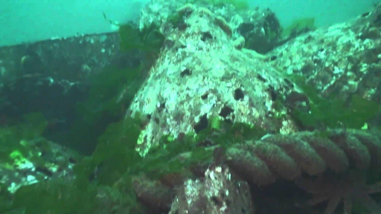 Scuba Dive Redondo Wa Nov 2010