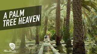 A hidden paradise in Al Ain | Visit Abu Dhabi