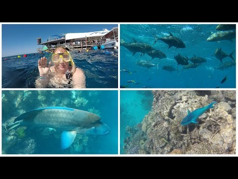 Put the Great Barrier Reef on your bucket list - Vlog : 9th Aug, 2017