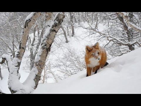 Подсчет диких животных в Челябинской области