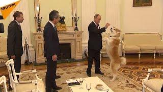 プーチン大統領、愛犬「ゆめ」を記者団にお披露目 thumbnail