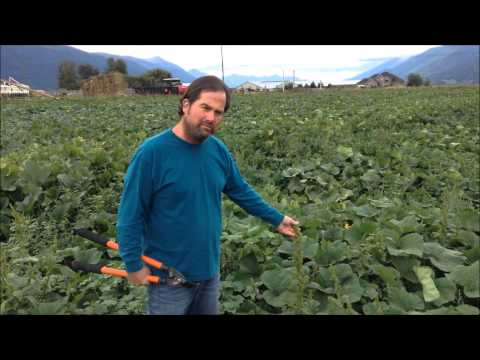 Derek's Organic Squash Farm in Creston, British Columbia