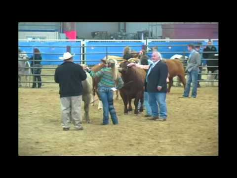 Junior Market Steer Show Day 2- Broadcast - Competitive Events Rodeo Austin