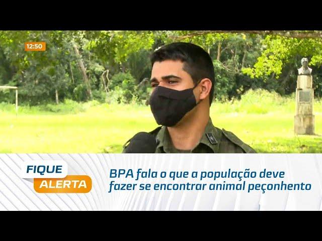 BPA fala o que a população deve fazer se encontrar animal peçonhento em áreas residenciais