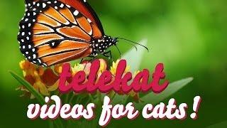 Telekat: videos for cats to watch - Beautiful Butterflies