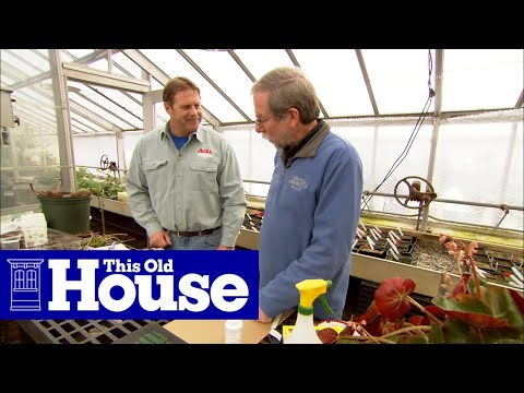 How to Propagate Plants from Cuttings | This Old House