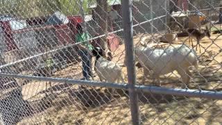 Red rock bonnie springs zoo 2016