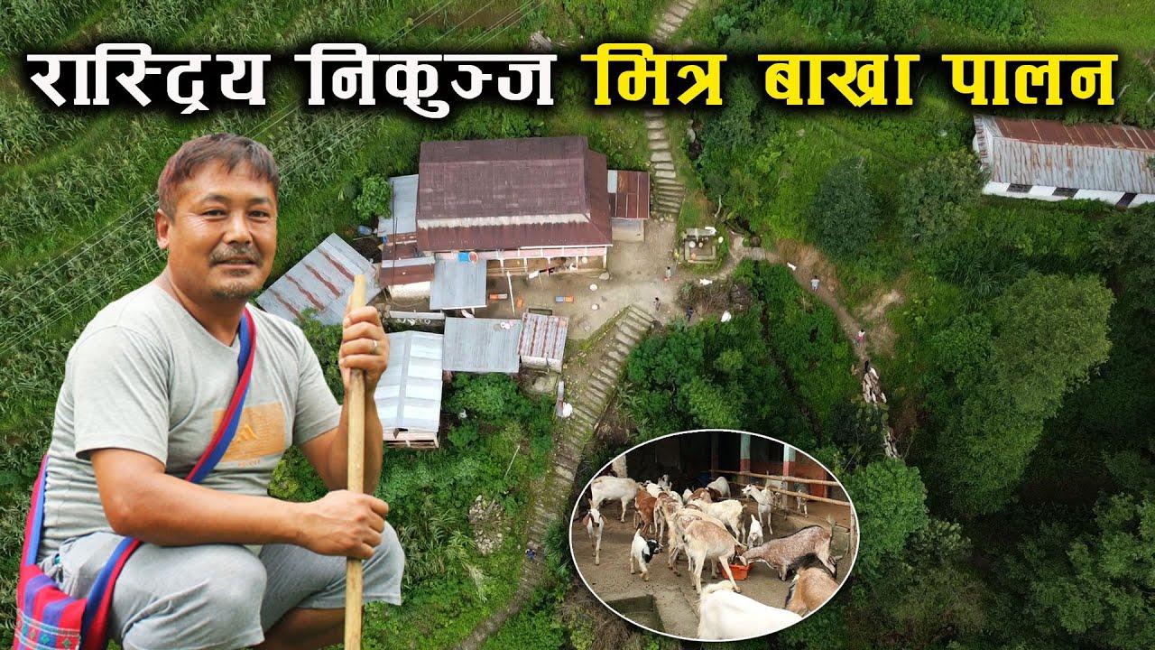 राष्ट्रिय निकुञ्ज भित्रको गाउँमा बाख्रा पालन,चितुवासंग घम्साघम्सी ! - Goat rearing/farming in Nepal