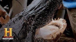 Swamp People: Biggest, Baddest Gators of Season 6 | History