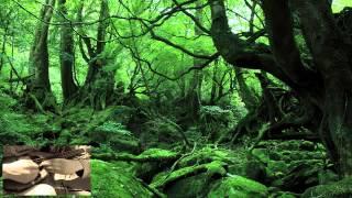 ジブリ映画「もののけ姫」主題歌(久石譲作曲)をマンドリンで。( Princess Mononoke By Mandolin)