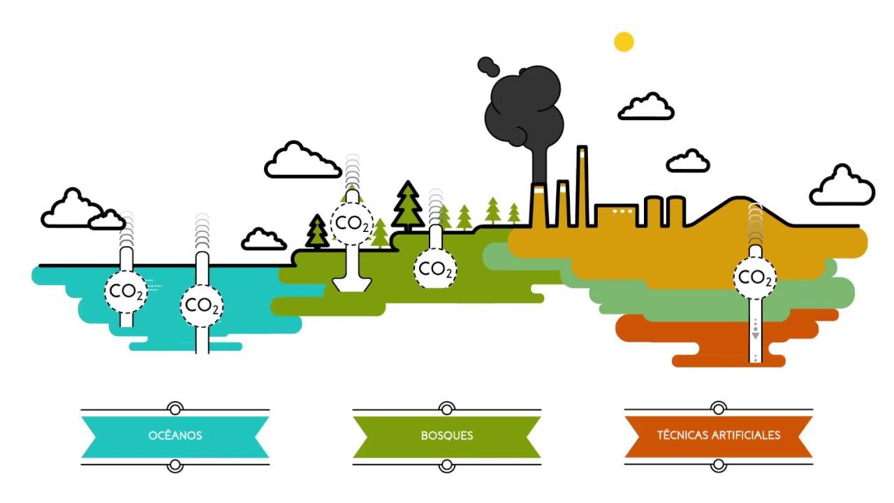 Que son los sumideros de carbono  Sostenibilidad  YouTube