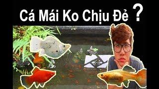 Vlog 105: Tạo Môi Trường Sinh Sản Cho Cá Cảnh ( Cá 7 màu, Bình Tích ) Ryan Nguyen_The Fish Lover