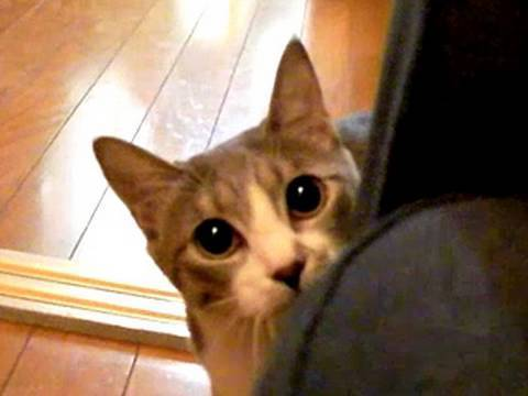Thumbnail for Cat Video Stalking Cat