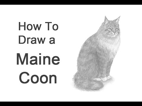 how-to-draw-a-maine-coon-cat-(or-norwegian-forest-cat)