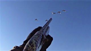 Охота на утку Утка в шурпу сом на сковородку