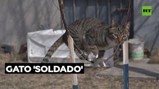 Un exsoldado chino entrena a su gato para que haga toda clase de trucos | RT Play