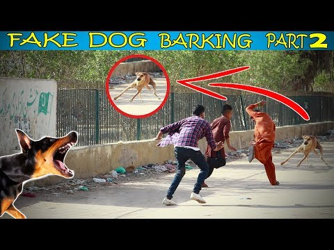 Fake Dog Barking Prank (Part 2) By |FRANK LAB TV| Very Funny