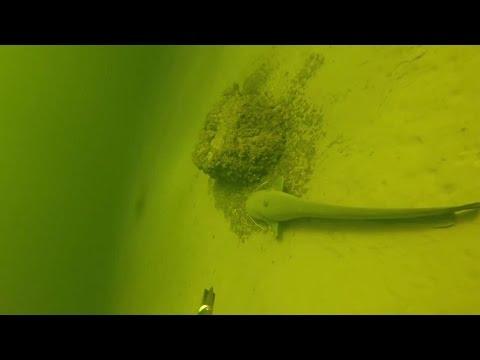 Подводная Охота на Сома. Места Обитания и Тактика Поиска...ЦЕНИТЕЛЬ