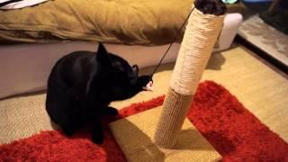 【Amazon】マルカン どこでもツメとぎタワーS 猫用 http://amzn.to/1CQi...