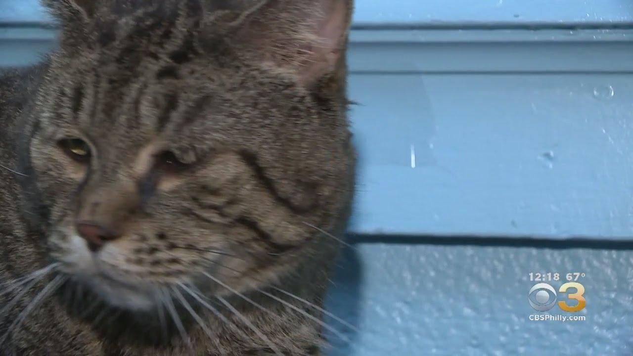Huge Cat Up For Adoption In Philadelphia Crashes Shelter\u0027s Website