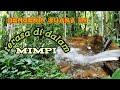 Suara Air Dan Suara Binatang Hutan  Mp3 - Mp4 Download