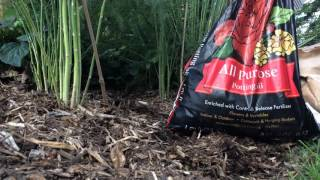 Planting asparagus in Fall ,for spring jump!