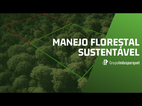 Manejo Florestal Sustentável
