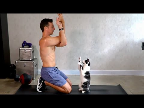 Cats Interrupting Exercise