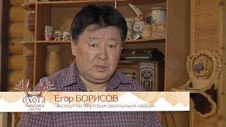 Якутская охотничья лайка. Интервью Егора Борисова