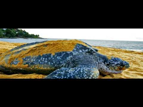 Guiana francese bei paesaggi - alberghi alloggi voyage vela