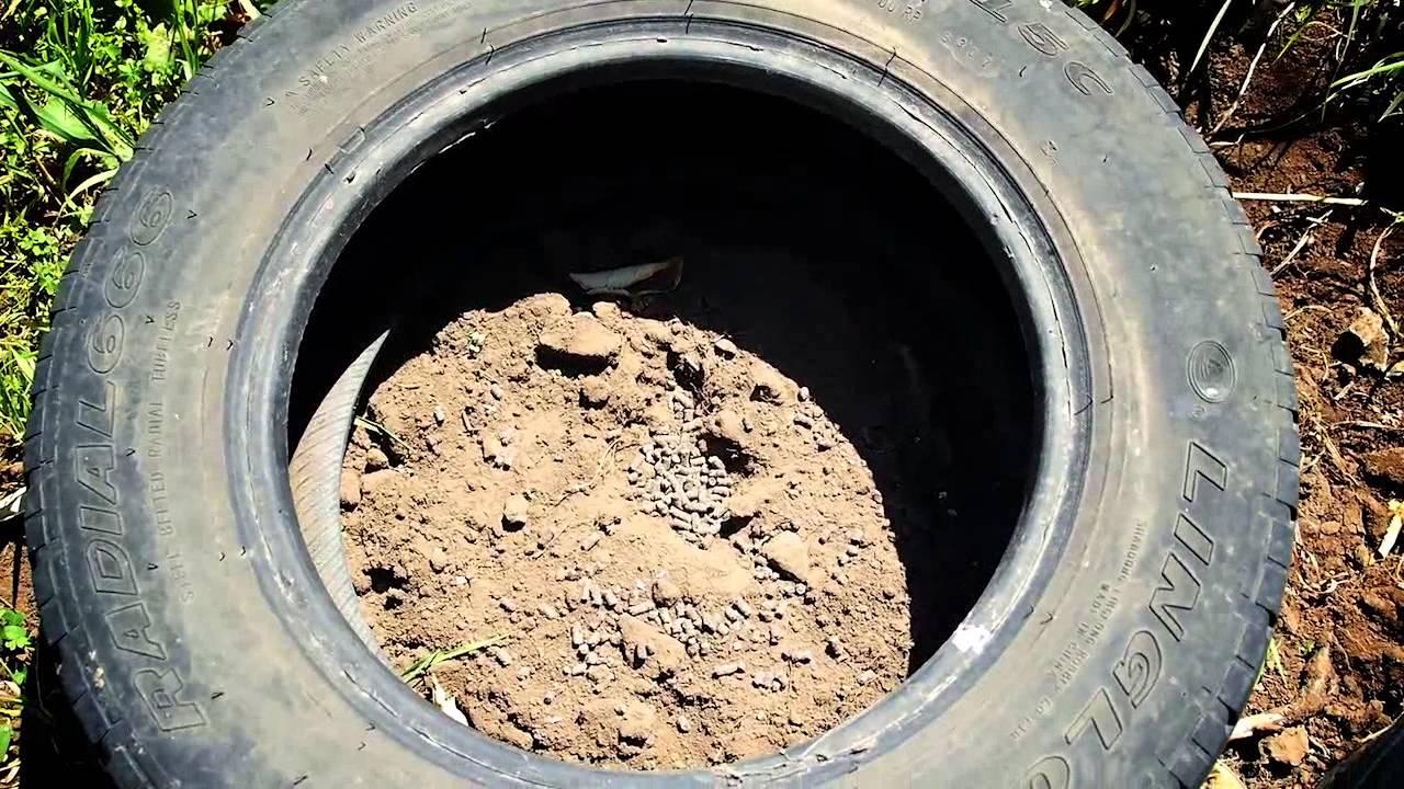 Como sembrar papas en neumaticos usados sistema for Como cultivar patatas