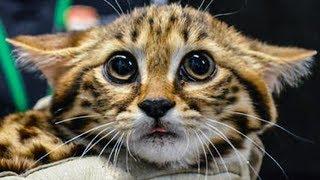 Dieses süße Ding ist die tödlichste Katze der Welt