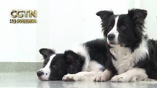 Учёные Венского ветеринарного университета разработали «судоку для собак»