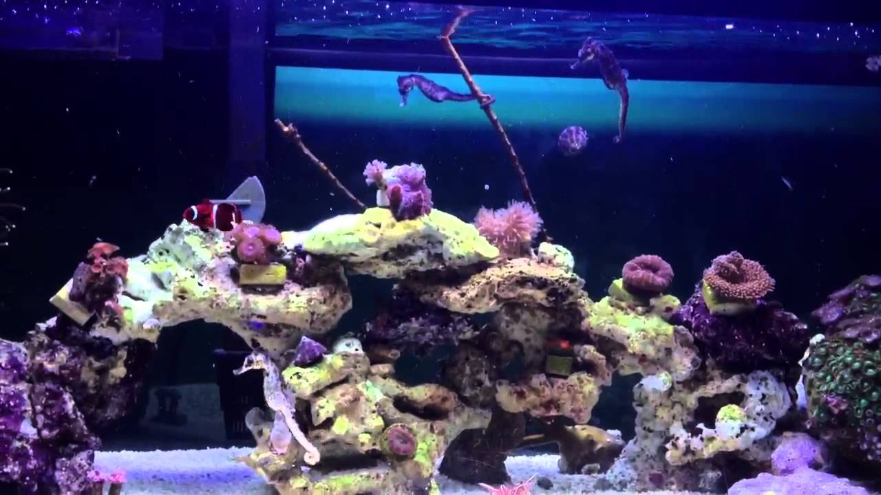 Seahorse reef tank 20 gal youtube for How to start a saltwater fish tank