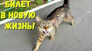БИЛЕТ В НОВУЮ ЖИЗНЬ! Спасение кота - великана! Чуть не утонули по дороге во время ливня!