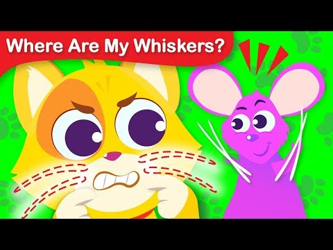Where Are My Whiskers? Can you Help Tom the Cat Find His Whiskers | Fun Animal Song by Little Angel