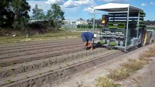 fully automatic 4 row lettuce transplanter from Transplant Systems