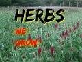 Herbs We Grow