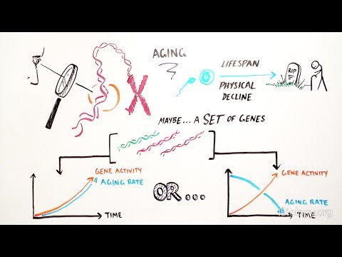 Genetics Of Aging - IBiology & Youreka Science