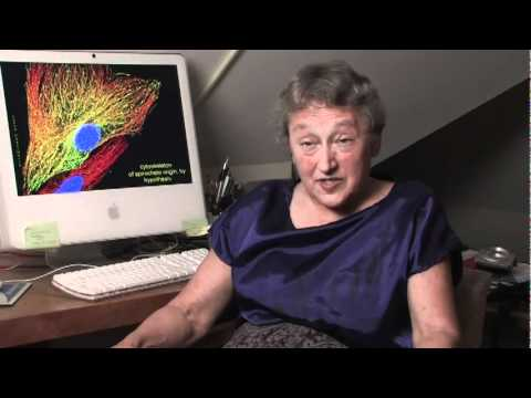 Lynn Margulis (PhD - Scientist) - 9/11 Explosive Evidence - Experts speak out (AE911TRUTH)