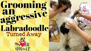 Grooming an aggressive Labradoodle