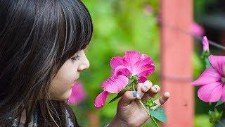 Могут ли растения воспринимать эмоции человека?