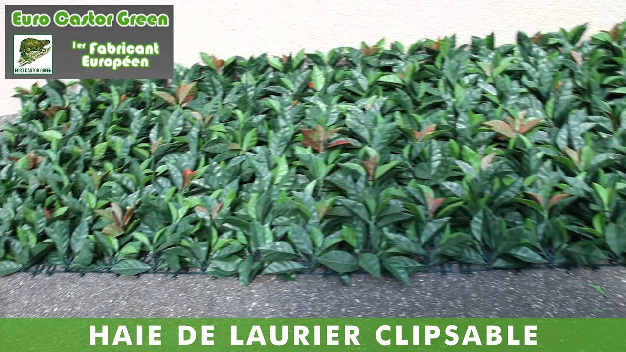 Haie de laurier clipsable la haie artificielle brise for Arbre decoratif exterieur
