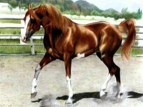 Resultado de imagen para caballo alazan