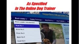 The Online Dog Trainer - The Online Dog Trainer Review: This Really Works