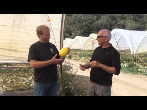 Chris Cadwell fromTutti Frutti Farm Tells Us How To Enjoy Spaghetti Squash