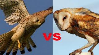 How smart birds are: TomoNews' most intelligent birds stories - Compilation
