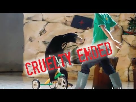 Cruelty ended: sun bear no longer has to perform for food